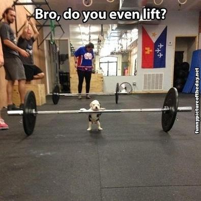Bro do you even lift funny dog