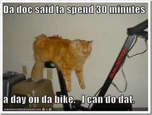 Funny Cat Picture Fitness Motivation Humour